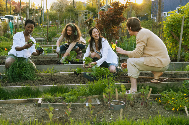 People working in a community garden --- Image by © Monalyn Gracia/Corbis