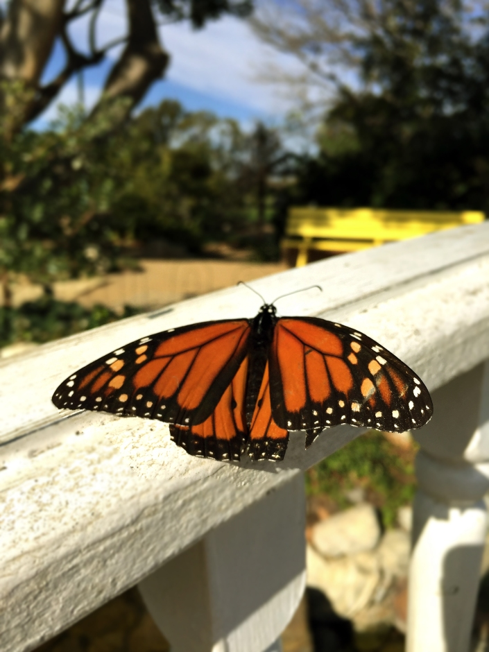 an-ugly-caterpillar-a-butterflys-story